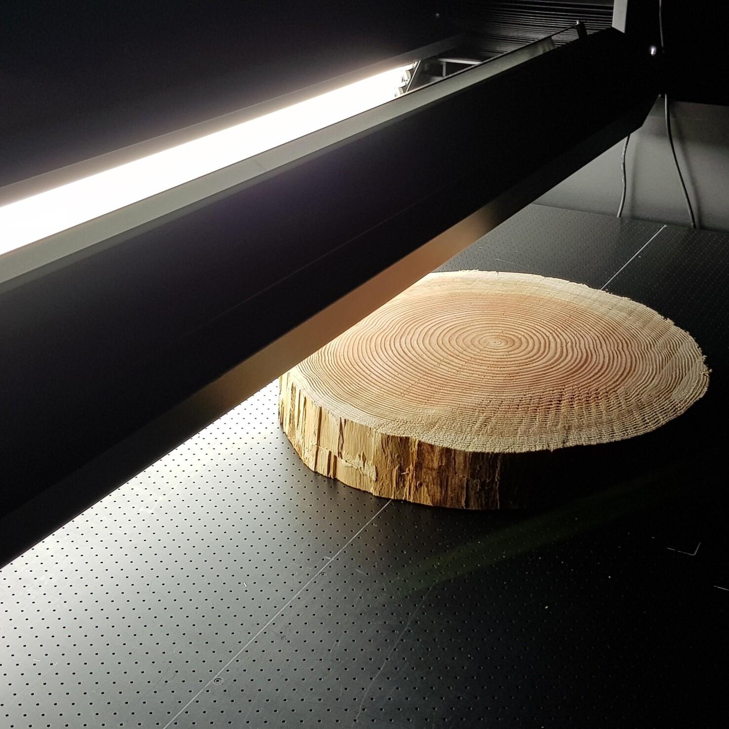 Holzscheibe - Scan